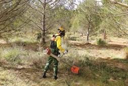 Nova lei quer impedir o fracionamento das áreas florestais. A localização geográfica é determinante para definir a extensão mínima que as propriedades podem ter