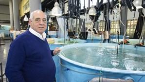 Olhão estuda aquacultura de sardinhas e primeiros exemplares fizeram um ano