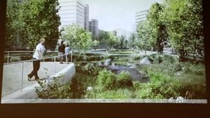Parlamento aprova alterações legislativas para melhorar proteção do arvoredo urbano