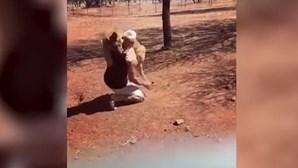 Vídeo mostra homem a pegar leão ao colo como se fosse um bebé