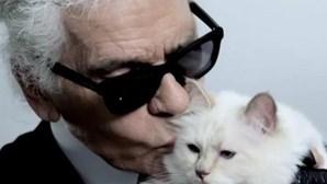 A herdeira da fortuna de Karl Lagerfeld é... a sua gata