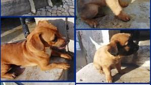 Sete cães resgatados de casa imunda pela PSP em Lisboa