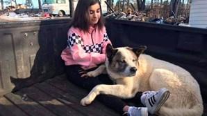 Cão desaparecido regressa à casa dos donos 101 dias após incêndio devastador na Califórnia