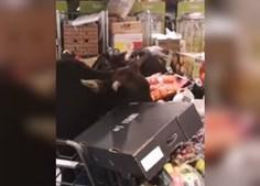 Vacas selvagens invadem supermercado em Hong Kong