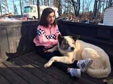 Cão regressa à casa dos donos 101 dias após incêndio devastador na Califórnia