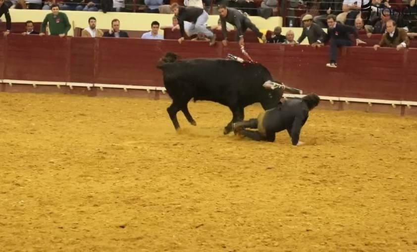 Cavaleiro Rui Salvador colhido por touro no Campo Pequeno