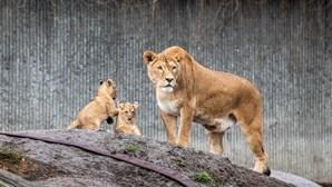 Homem coloca 1700 espécies de animais em risco acrescido de extinção até 2070