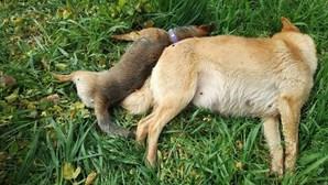 Envenenamento de cães deixa população chocada