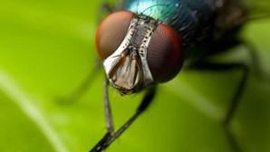 Arranca projeto de inventariação de invertebrados