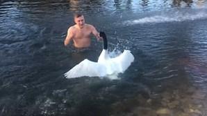 Cisne expulsa intruso de lago privado
