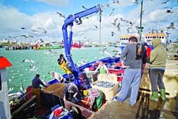 Pescadores algarvios capturaram mais peixe em 2018
