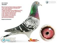O pombo Armando e a lista dos seus recordes