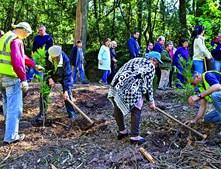 Reflorestação no Buçaco avança com o apoio da comunidade