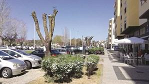 Troca de árvores gera revolta em Torres Vedras