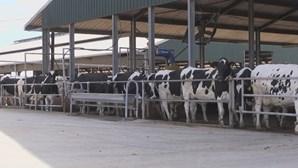 Vacas treinadas para usarem a casa de banho