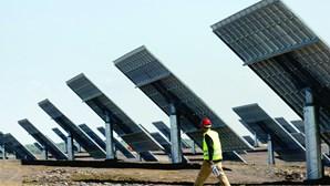 Nova central solar prevê abate de 335 sobreiros em Silves