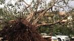 Ciclone Fani faz 15 mortos e deixa rasto de destruição na Índia e Bangladesh