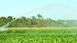 Agricultura conta com 699 milhões de euros