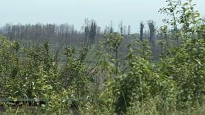 Empresas mineiras aproveitam fogos para conseguirem terrenos para extrair lítio