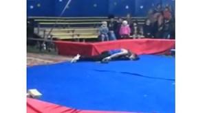 Artista de circo estrangulado por cobra em plena atuação
