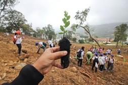Esta sexta-feira cerca de 300 crianças de várias escolas da região plantaram árvores junto à vila de Monchique