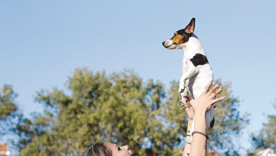 Como comunicam os animais de estimação
