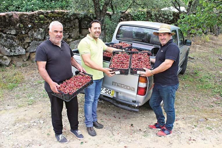 Produtor Armando Ferreira (à direita) e Ricardo Simões, da Associação de Produtores de Cereja de Penajóia (ao centro)