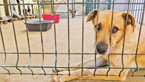 Estado entrega 10 milhões para autarquias apoiarem canis e esterilização de animais
