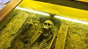 Fóssil com 29 mil anos vai ser classificado