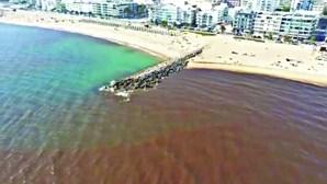 Maré vermelha fecha praias no Algarve