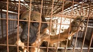 Ativistas resgatam mais de 60 cães em matadouro na China