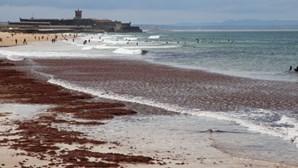 Detetados problemas na água de 37 praias