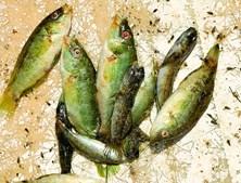 Algumas espécies de peixe aparecem mortas na Lagoa de Albufeira