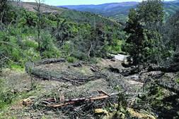 Floresta vai regenerando mas sem ordenamento
