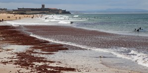 Praia de Carcavelos interdita a banhos devido a presença de algas vermelhas
