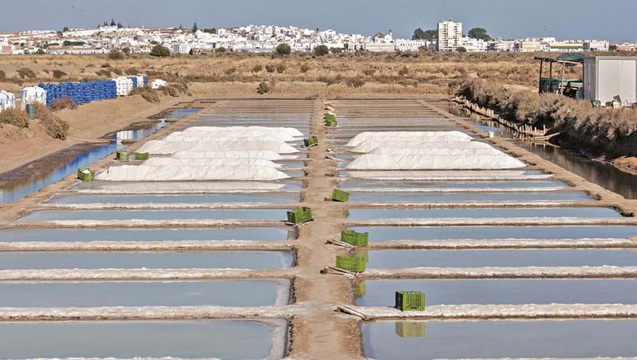 Algarve reúne as melhores condições para a produção de sal marinho por evaporação solar na costa nacional