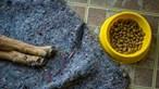 Canil ilegal em Canedo gera processo-crime por maus-tratos a animais