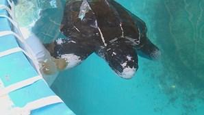E o nome escolhido pelos portugueses para a tartaruga em reabilitação no Zoomarine é...