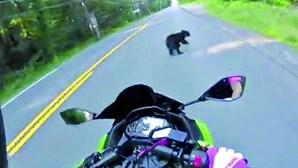 Urso atravessa-se em estrada num encontro quase fatal
