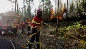 Balanço provisório aponta para 3.700 hectares de floresta ardidos em Vila de Rei