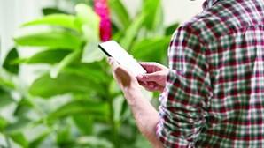 Piratas informáticos atacam contas via SMS