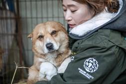 85 cães resgatados e salvos de serem abatidos num mercado de carne canina