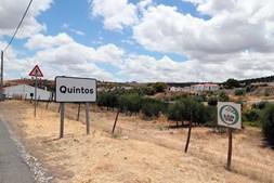 Plantação de olival intensivo perto da aldeia de Quintos (Beja),