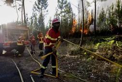 Incêndio florestal em Vila de Rei