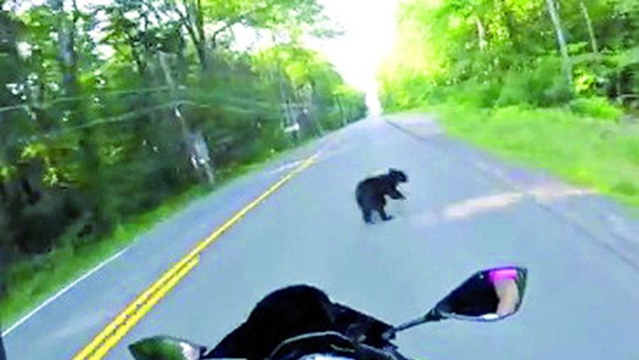 Condutor filmou todo o momento em que o animal se atravessa na via.