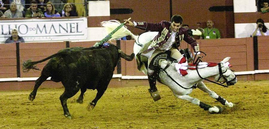 Cavalo Xeque-Mate sofreu fratura exposta e foi abatido
