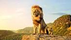 'Rei Leão' é fenómeno nos cinemas nacionais