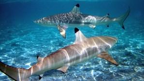 Vacina contra a Covid-19 pode obrigar a matar meio milhão de tubarões