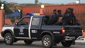 Polícia angolana apreende 700 quilos de marfim e de escamas de pangolim