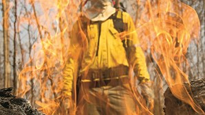 Queimadas proibidas para ajudar a conter os incêndios na Amazónia